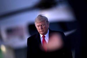 ترامپ امسال دوباره رئیسجمهور میشود!