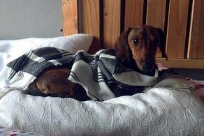 زنده مانده عجیب این سگ 6 روز بعد از سقوط از هواپیما!+ عکس