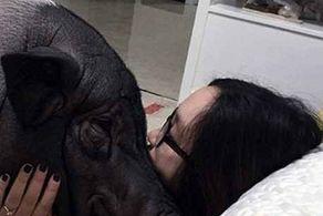 رابطهی عاشقانه و عجیب این زن با خوک! +عکس