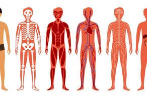 10 حقیقت جالب درباره بدن انسان!