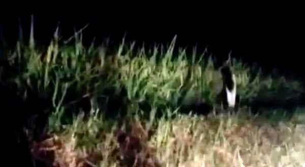 فرار هولناک بچه روح یک پا در شب! + عکس