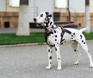 با وحشیترین سگهای دنیا آشنا شوید!+عکس