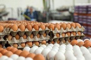 قیمت تمام شده تخم مرغ درب مغازه ۱۵۳۵ تومان است/ فروش تخم مرغ ۲۰۰۰ تومانی منطقی نیست/ باز هم پای دلالان در میان است