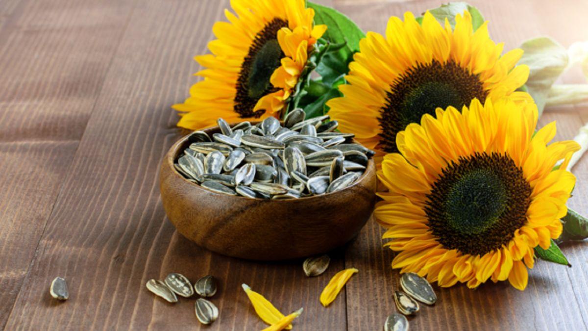 زیاده روی در استفاده از دانههای آفتابگردان چه خطراتی دارد؟